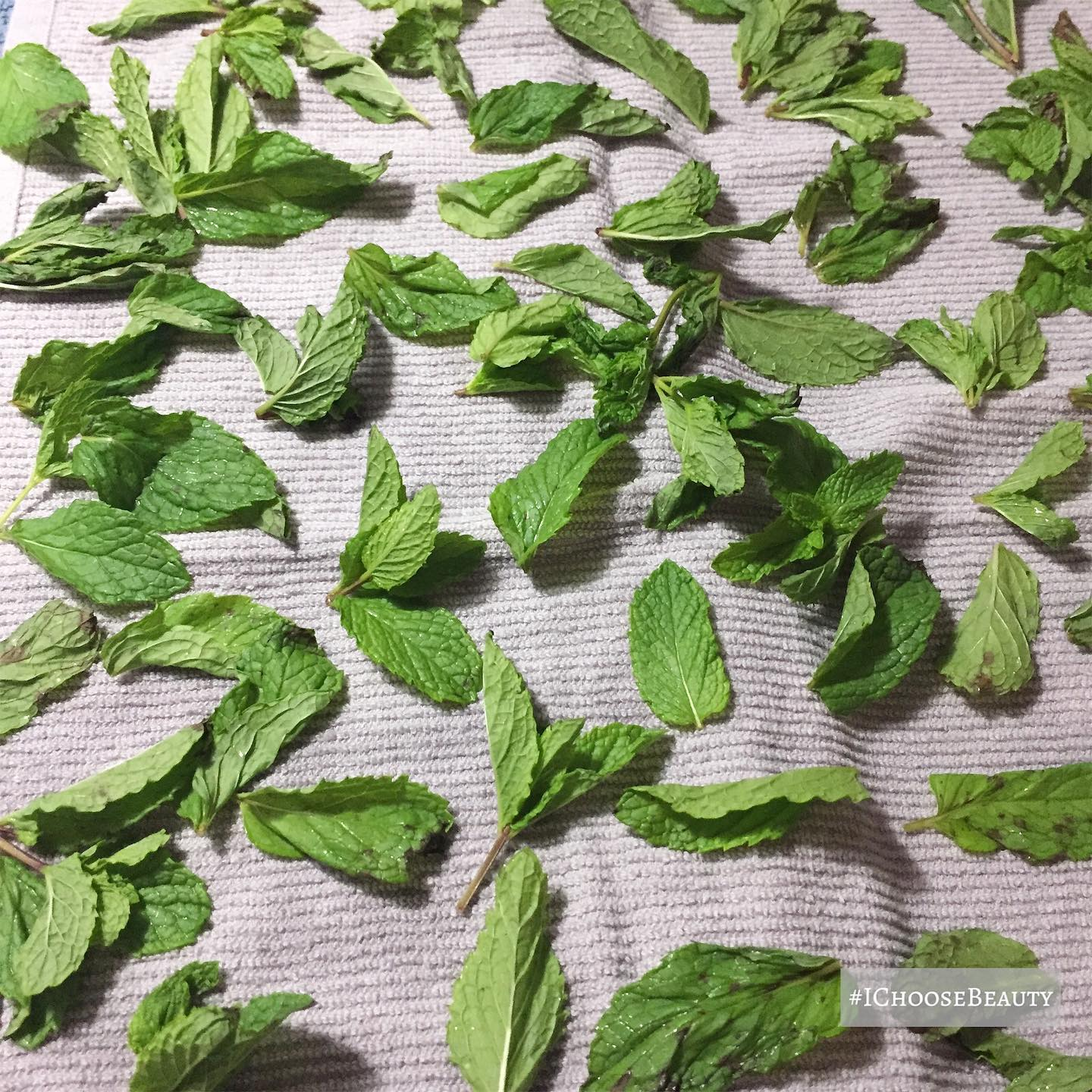 I'm in heaven over here with the smell of these mint leaves! Made some delicious tea, and froze the rest for later.  #ichoosebeauty Day 2395