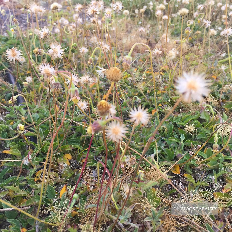 Pretty little weeds. #ichoosebeauty Day 2397