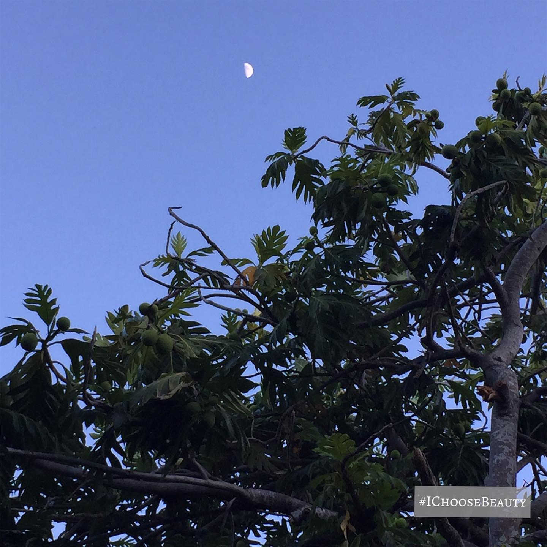 Evening moon, always magical. #ichoosebeauty Day 2444