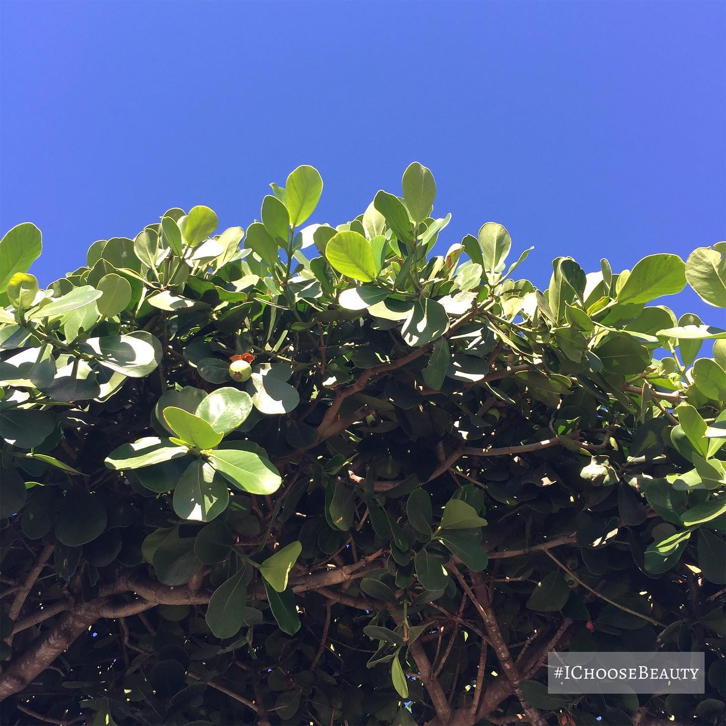 Gorgeous blue sky today. #ichoosebeauty Day 2568