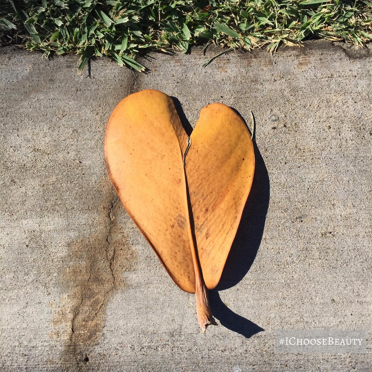Thanks for the love, little leaf! 🧡 #ichoosebeauty Day 2570
