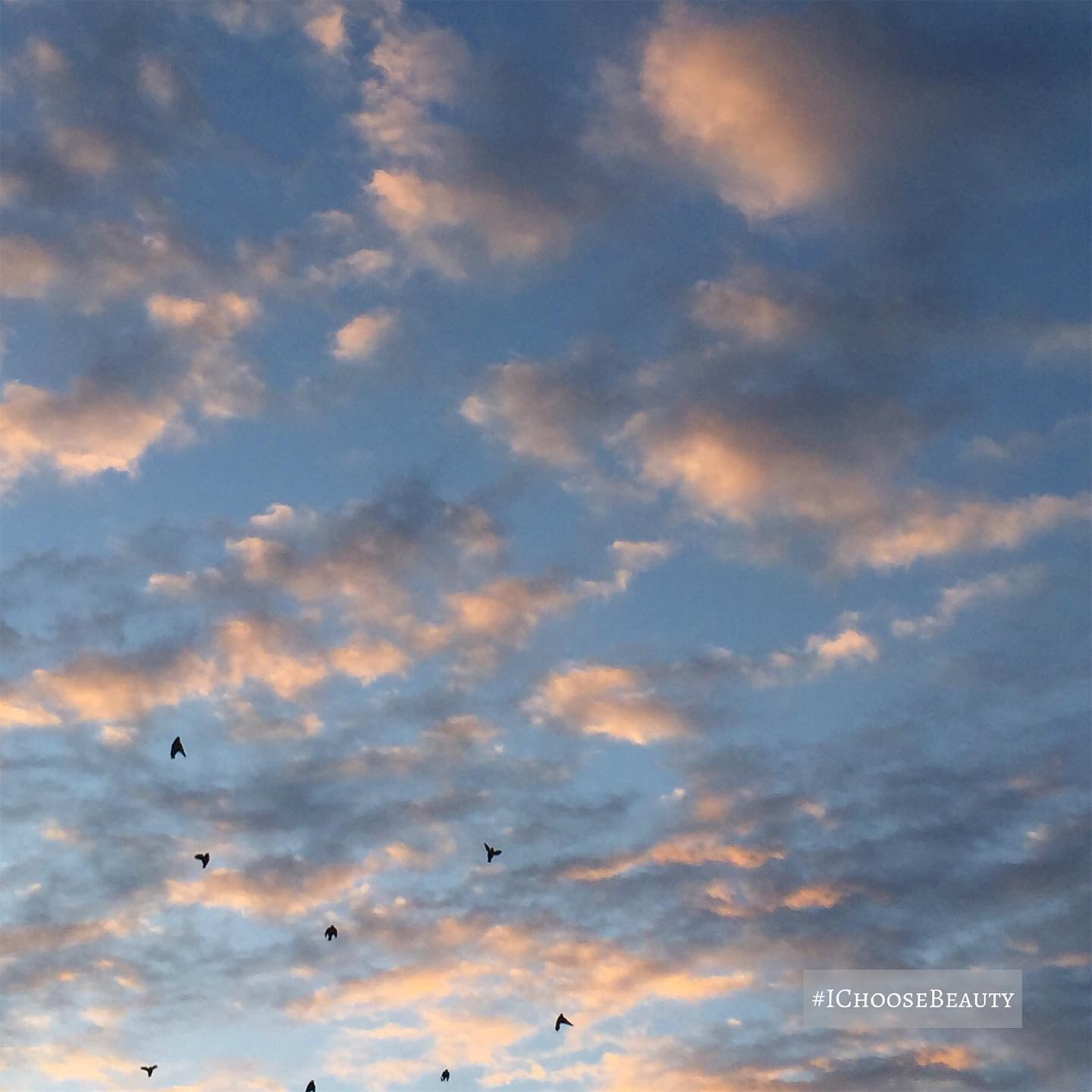 Evening clouds... with some birds I didn't know I captured, but I'm so glad I did! #ichoosebeauty Day 2731