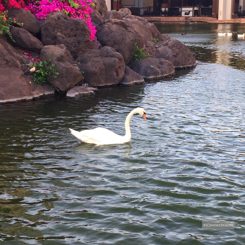 Hello, sweet swan. #ichoosebeauty Day 2739