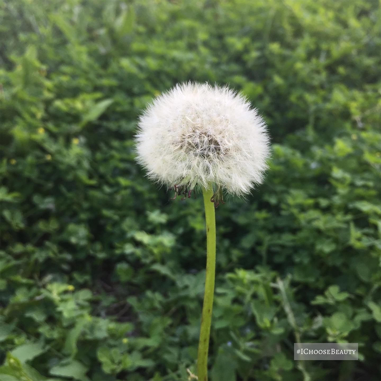 Make a wish.  #ichoosebeauty Day 2749