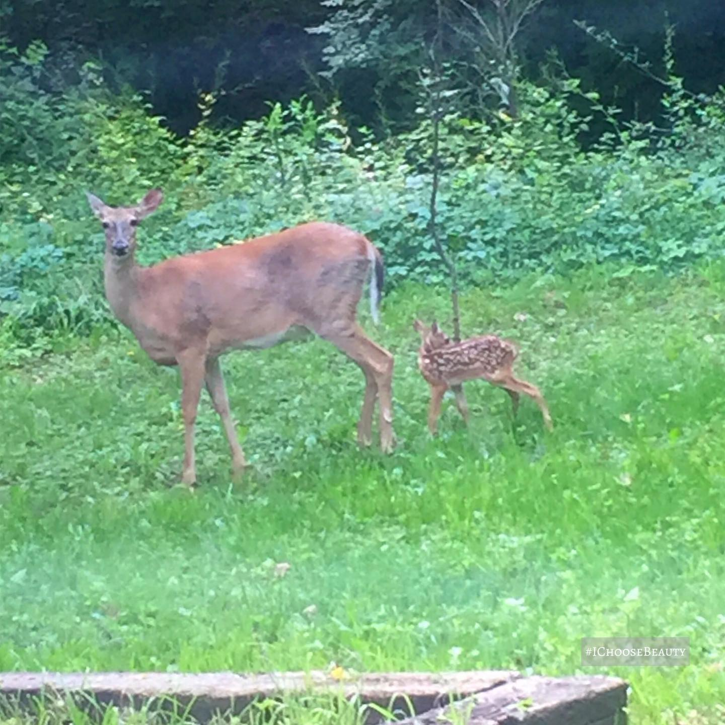 OMGGGGGG look at who came our backyard to say hello to me this morning!! ️️️ I'm in love with the little spotted bebe, even though he turned his head in the photo.  #ichoosebeauty Day 2757