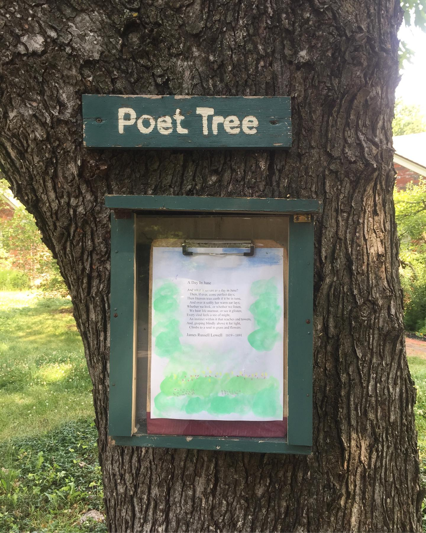 I discovered a new type of tree today! It's a poet-tree!  It grows poems! 😮😀#ichoosebeauty Day 2769